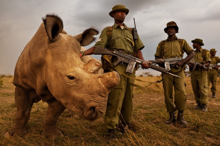 The last male white rhino is protected by its own team of anti-poachers
