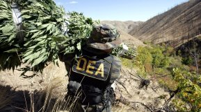 """** ADVANCE FOR WEEKEND OCT. 1-2 ** A Drug Enforcement Administration agent shoulders a bundle of marijuana plants down a steep slope after working with other law enforcement officers to clear a patch of the plant from national forest land near Entiant, Wash., Sept. 20, 2005. Police confiscated 465 marijuana plants at the so-called """"garden,"""" a small find compared to the thousands of other plants confiscated on some other busts in the area. The illegal marijuana growing operations are wreaking havoc on counties with huge tracts of open space and few resources to tackle them. (AP Photo/Elaine Thompson)"""
