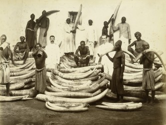 Ivory Trade Late 19th Century