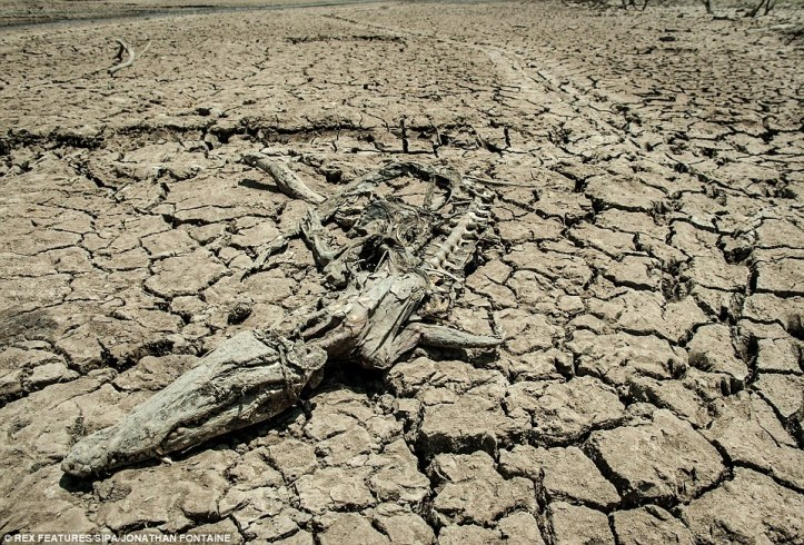 Crocodile skeleton lies on a dried out riverbed in Ethiopia. Image Credit: Rex Features/SIPA/Jonathan Fontane